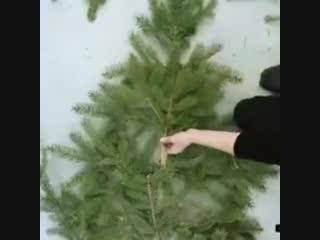 идея для тех, кто потив вырубки живых елок. Берите веточки