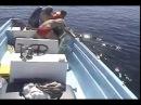 Baleine à Bosse Remercie ses Sauveteurs Après avoir été Libéré d'un Filets