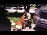 TRY NOT TO CRY Dogs Meet Their Owner After Long Time II NEW (HD) Funny Pets
