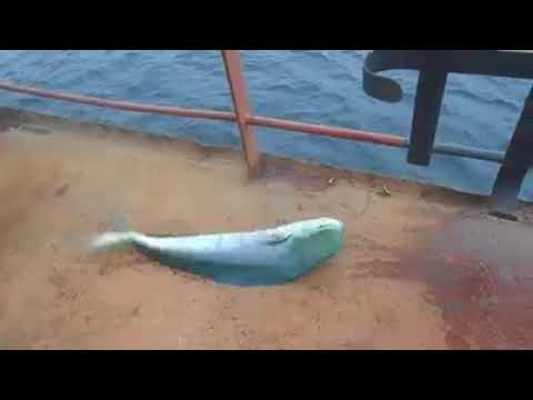 Şans eseri bulunmuş bir balık tutma yöntemi