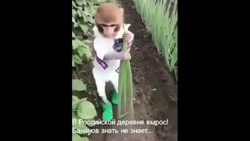 Обезьяныч