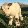 """Nature on Instagram: """"Follow @nature: Baby Goat, how cute! 😍🐐 Rate 1-10? Video by @the_gaysian_cowboy nature"""""""