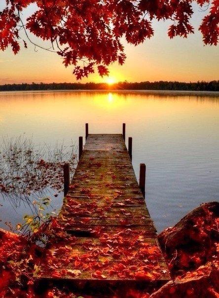 Отцвели цветы, падают листья, птицы молчат, лес пустеет и затихает.ОСЕНЬ. - Страница 5 4UifPCPzncc