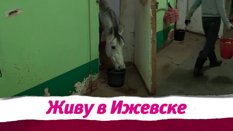 Разрешится ли ситуация на Ипподроме Ижевска?