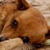 """Помощь бездомным животным в Нягани """"Ноев Ковчег"""""""