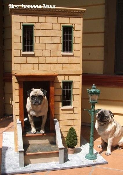 собачьи будки. эти хозяева очень любят своих собак :)