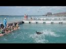 Дельфинарий Куба 6