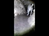 1. Лисичкина пещера ( Тильки-Коба)