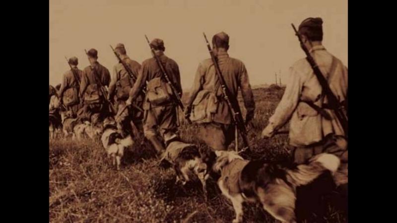 150 пограничных собак которые рвали нацистов в рукопашном бою