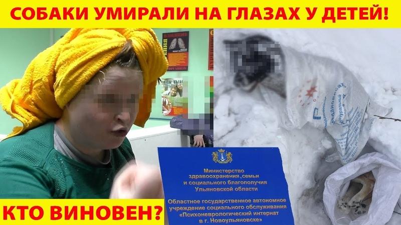 В Новоульяновске на глазах у детей инвалидов отравили собак!