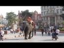 Амритсар. По улице слона водили