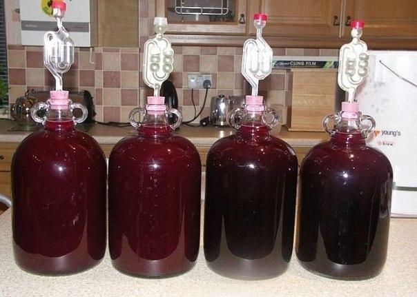 ВКУСНОЕ Домашнее сливовое ВИНО по рецепту от известного винодела !