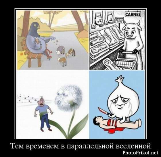 Фото №284834859 со страницы Сергея Прилько
