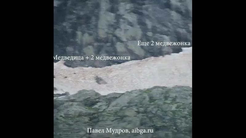 В Кавказском заповеднике сняли на видео прогулку медведицы с четырьмя медвежатами