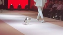 Cat Invades Fashion Show And Teaches Models How To Walk The Real Catwalk