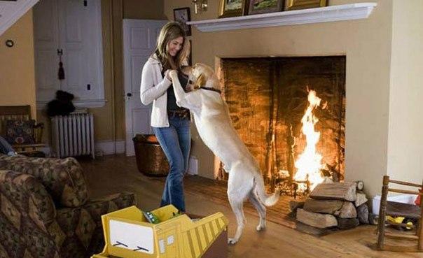 Собака — это не просто друг человека, это часть семьи!