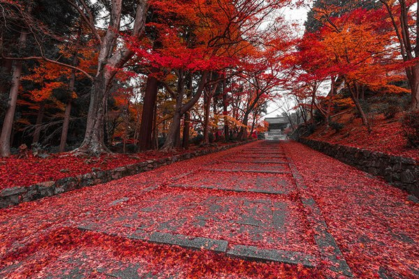 Осенний парк, Киото, Япония