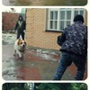 Профессиональная дрессировка собак