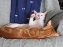 Кот гипнотизер (coub)
