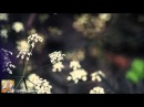 Andy Elliass & ARCZI - Letters To You (Original Mix) [Vital Soho] [Music Video] [HD 1080p]