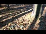 Беличьи нычки на зиму-2