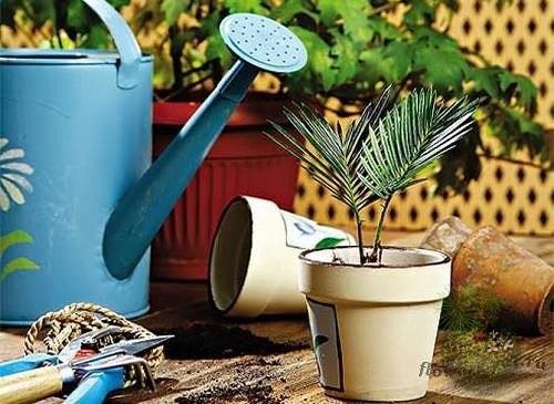 Как спасти залитое растение
