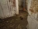 НЕБЛАГОПРИЯТНЫЕ ПОСЛЕДСТВИЯ КАПРЕМОНТА дома № 3 ул.Гоголя (г.Северодвинск, Ягры). Вода внутри подвала 3-го подъезда.