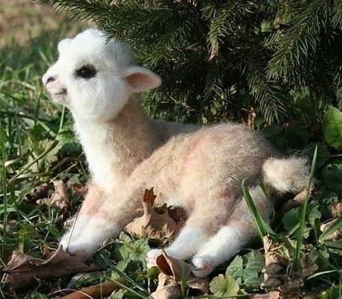 Малыш альпаки.