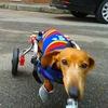 PetMobile - инвалидные коляски для животных