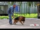 Инструкция Как воспитывать собаку