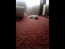 Юки Моя любимая Кошечка