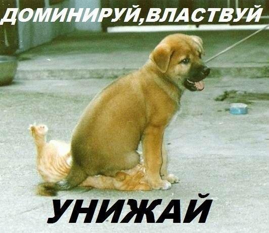 http://cs309831.userapi.com/v309831164/197a/DZmyMuOk8aA.jpg