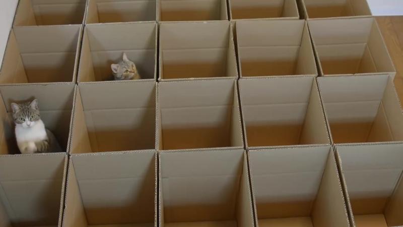Рай для котиков | Mews News | Котоновости