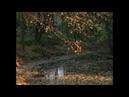 Alvaro Suarez - La Xana (Original Mix)