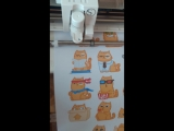 Подготовка заказа, стикер пак кота Персика, StickerMag (Резка)