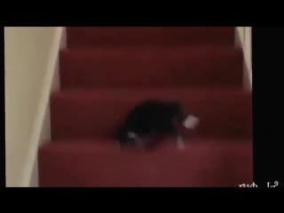 Животные на лестнице, смешно до слез