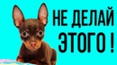 Вещи, которые ваша собака терпеть не может