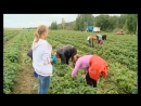 Новое для Удмуртии направление развивают предприниматели из Сарапульского района