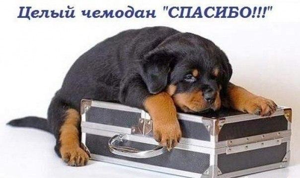 Ваши 100 рублей - шанс для Нюси дождаться хозяина! LQB-IQ9-98c