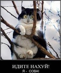 Ханиф Махмутов, 15 октября 1999, Кемерово, id172805808