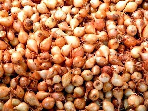 Семена любого лука прорастают очень трудно из-за большого содержания в них эфирных масел, а это значит, что перед посадкой их необходимо предварительно обработать.