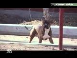 Собака нападает на людей, полиция стреляет