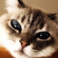 Cat-Troll Life-Live, 29 ноября , Москва, id202840438