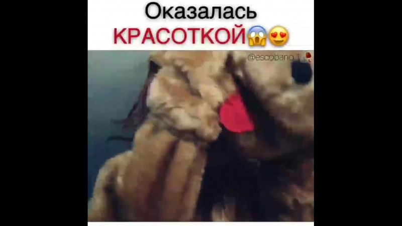 Красотка _scream__scream__heart_eyes_ ( 640 X 640 ).mp4