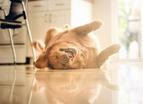 Литература о собаках, книги, рассказы, очерки.  - Страница 2 7ToY5BvsPZc