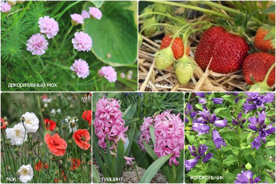Растения для кислых, слабо-кислых и нейтральных почв