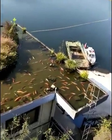 """Top Quality Aquatics 💎 on Instagram """"ROOFTOP KOI POND! 😨😨 What are your thoughts on this 😬 ⠀⠀⠀⠀⠀⠀⠀⠀⠀ 💎 Click the link in my bio for a chance to..."""