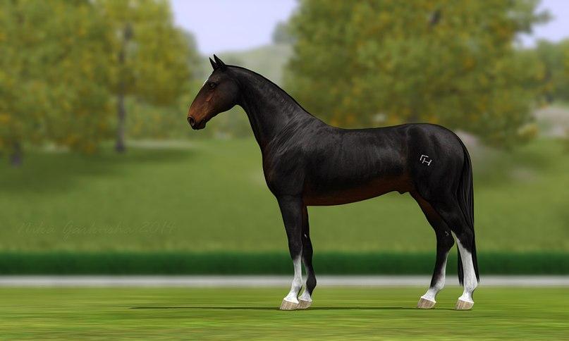 Регистрация лошадей в RHF 1.2 - Страница 6 PVIMSzRDwH4