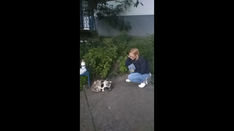 Накормили кошечку Ксюшу Она очень довольна