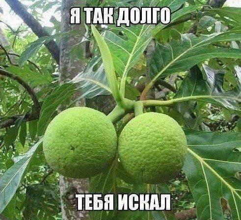 В лесах Индии растет растение калир-канда, называемое на местном наречии «обмани желудок» . Съев 1–2 листочка человек чувствует сытость на протяжении целой недели.